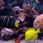 TV wallpaper videos - colorful marine life